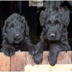 Supplemente für Hunde