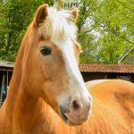 Supplemente für Pferde